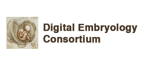 Digital Embryology Consortium logo